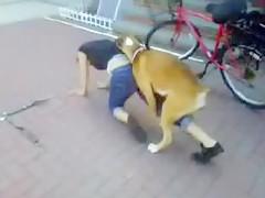 un perro se folla a su dueña en el parque