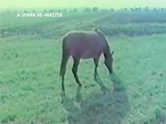 Horse milf sex