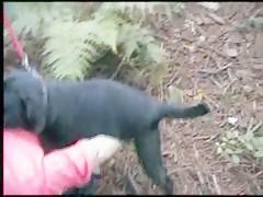 follando con el perro