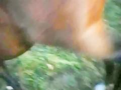German K9 Dog sex Lauchhammer Porn Sluts Milfs Teen zooporn animal ...