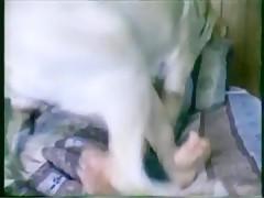 Chica penetarda por caballo