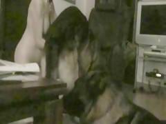 Dog Wanking
