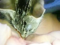 Cat lick my pussy