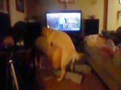 everyday doglove