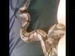 Una serpiente por el culo
